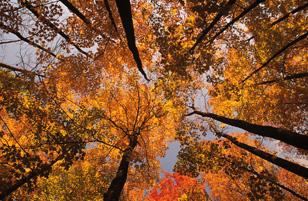 nature et bien-être au Canada